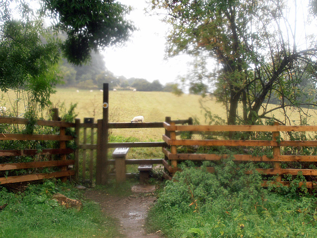 Cotswold Way 017 (yep, it's still raining)
