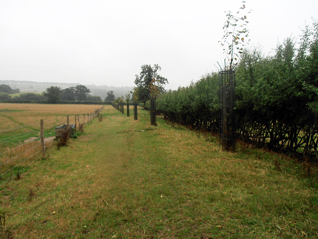 Cotswold Way 022 (it's started raining again)