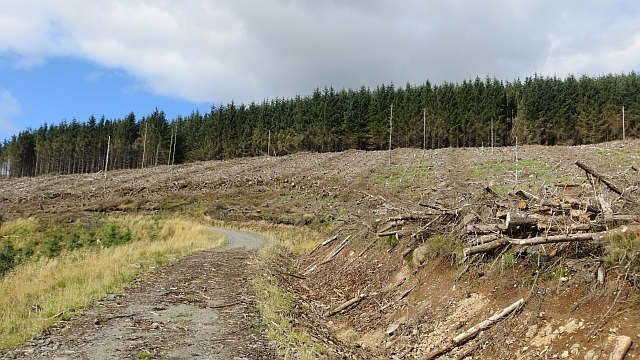 Clear felled area on Hillfoot  Hill