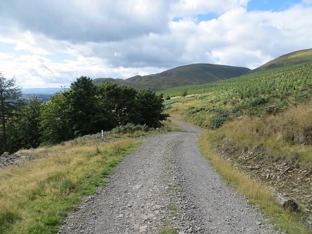 Logging road, Hillfoot Hill