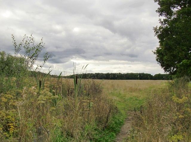 Effingham Common