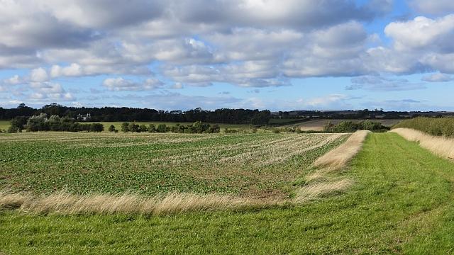 Arable land near Ancroft