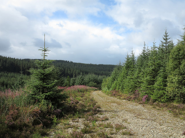 Forestry road in Penllyn Forest