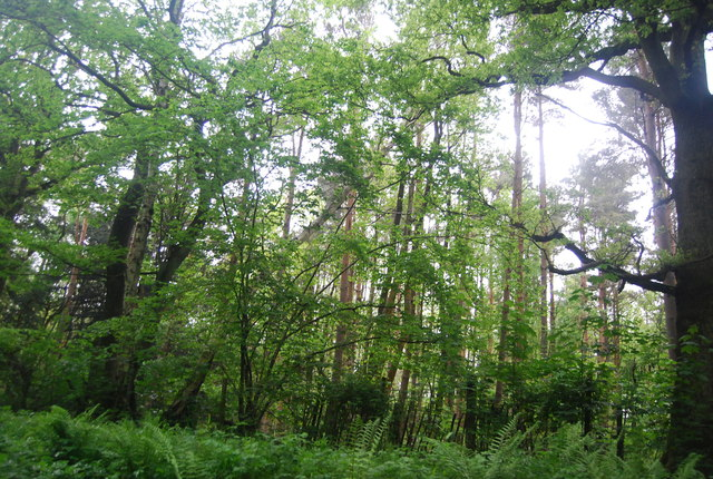 Woodland by the Worth Way
