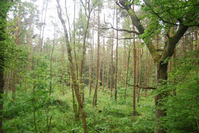Horsepasture Wood