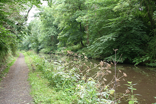 Beech Woods by the Union Canal