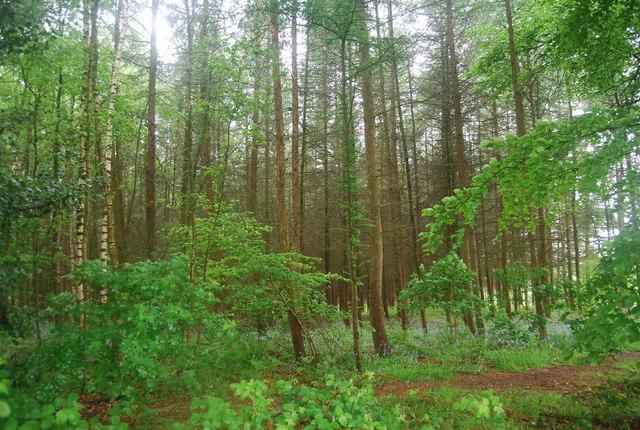 Oaken Wood
