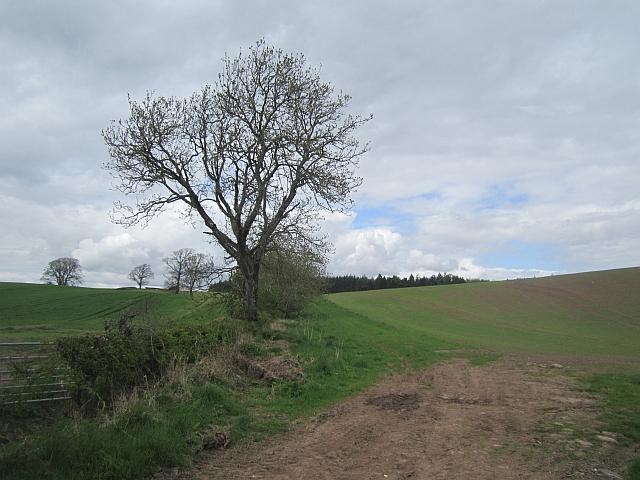 Arable land near Strathallan