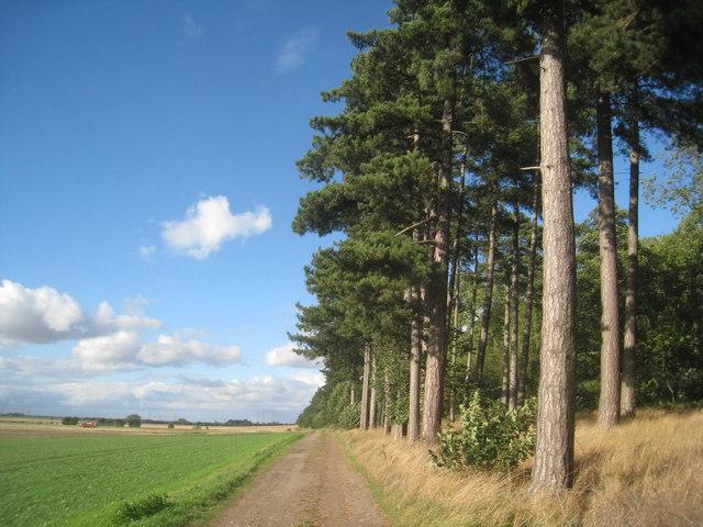 Bridleway and Burton Woods
