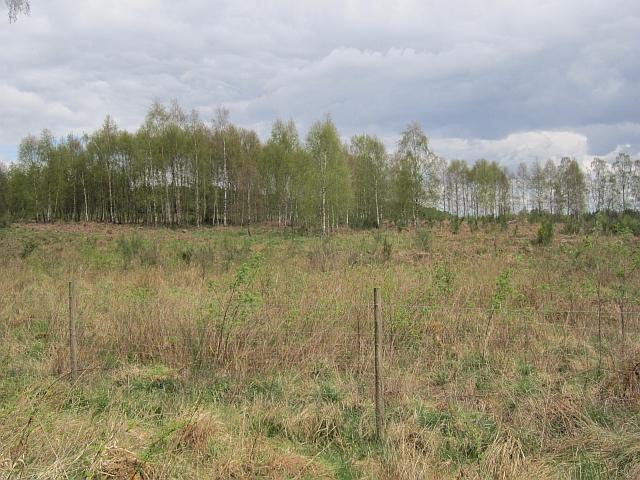 Pirnhill Plantation