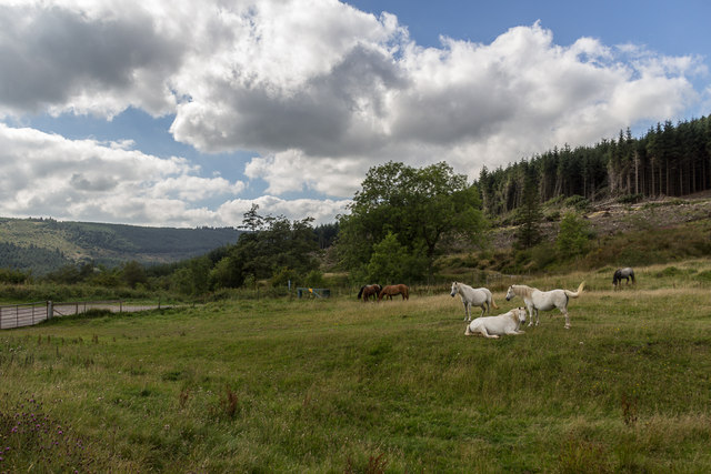 Horses near Taff Trail