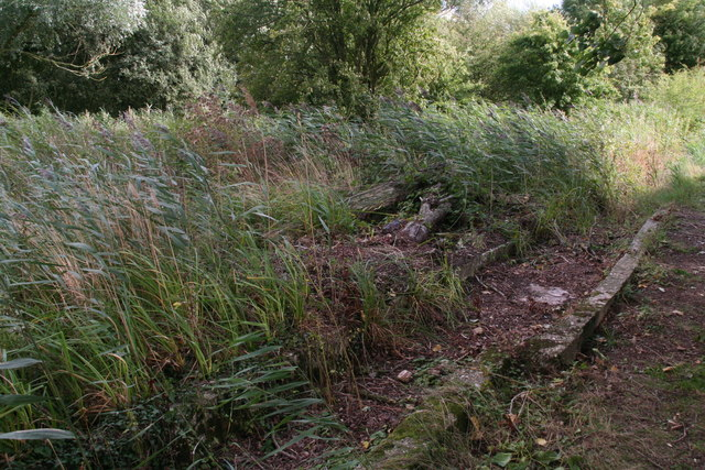 Water channel of the old watercress beds at Tetney Blow Wells