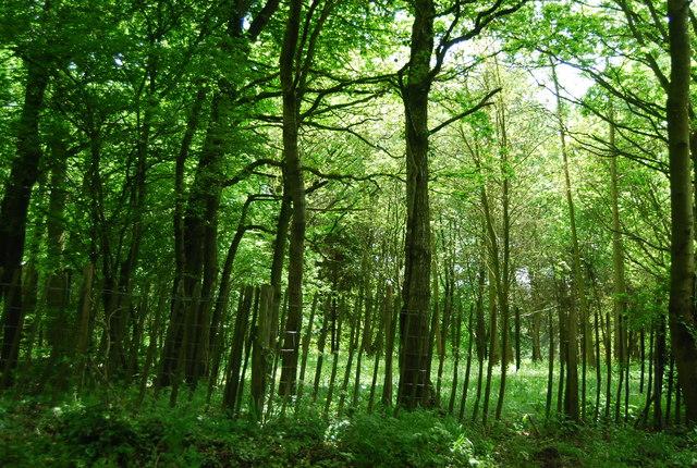 Woodland by Rocks Hill