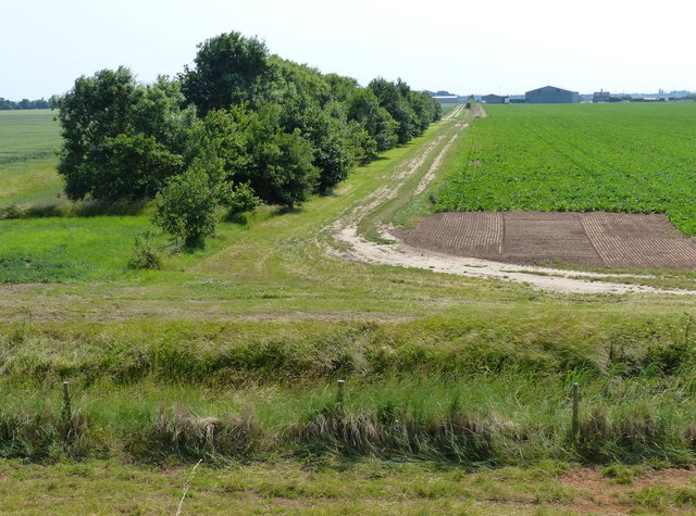 Line of trees near College Farm