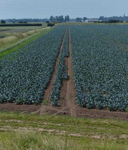Frampton Marsh farmland