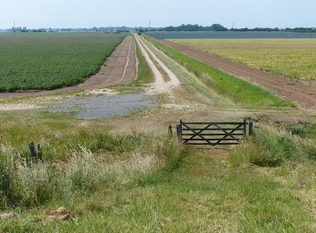 Farm track across Frampton Marsh