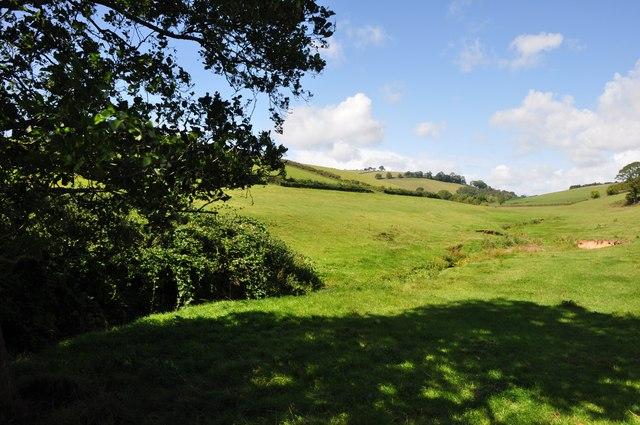 Mid Devon : Grassy Fields