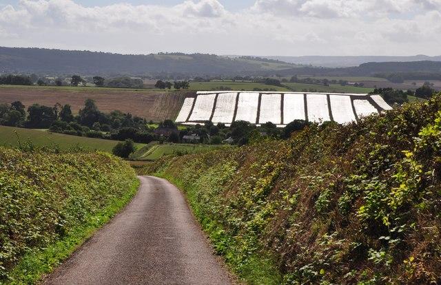 Mid Devon : Colaton Lane