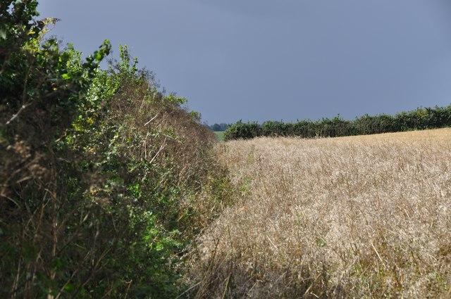 Mid Devon : Grassy Field & Hedgerow