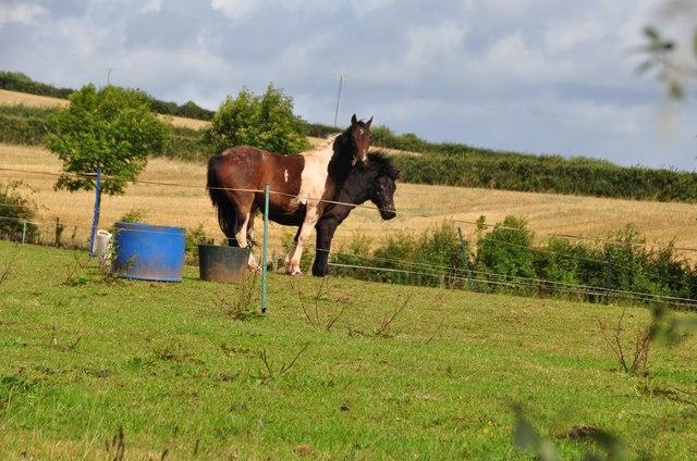 Mid Devon : Grassy Field & Horses