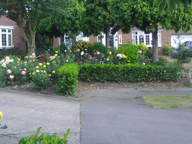 Rose gardens on Church Meadow, Long Ditton