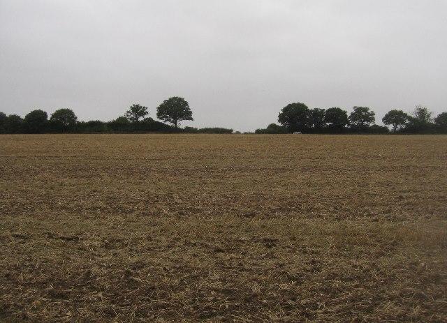 Farmland west of Ivy Down Lane