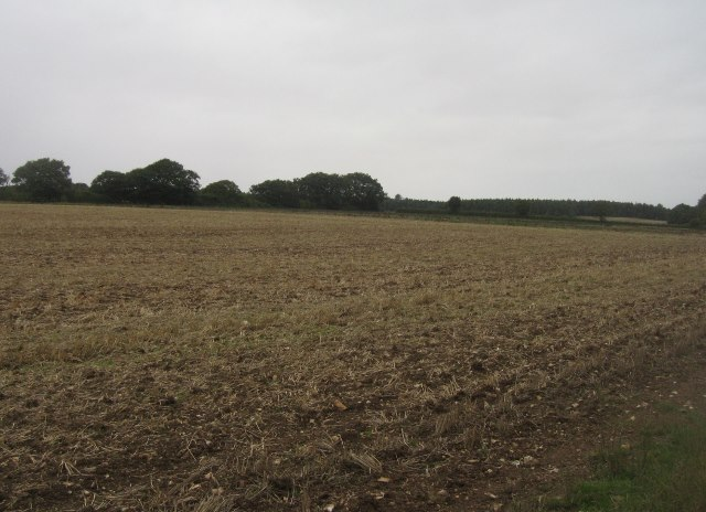 Farmland west of Ivy Down Lane