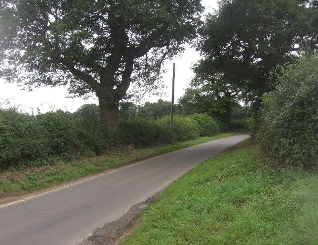 Ivy Down Lane