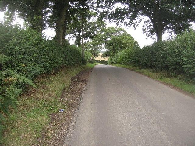 Slight brow -  Ivy Down Lane