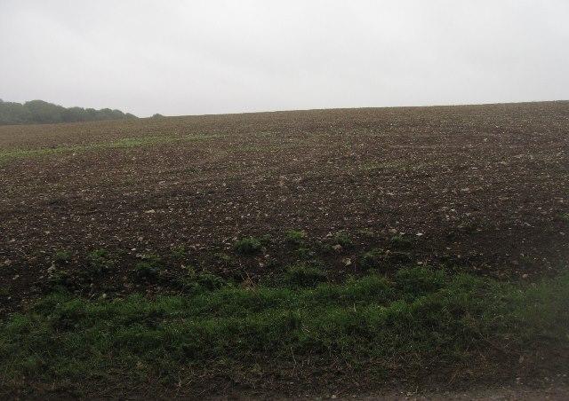 Farmland south of English Wood
