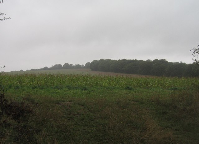 Fields west of English Wood
