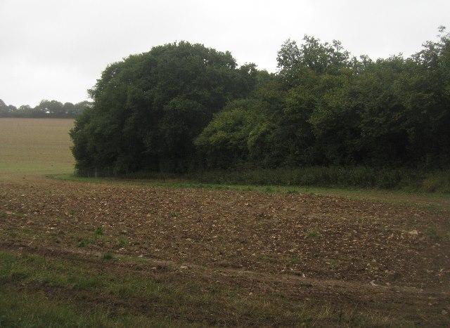 Corner of English Wood