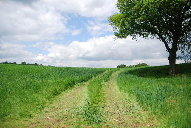 Grassy track across a field