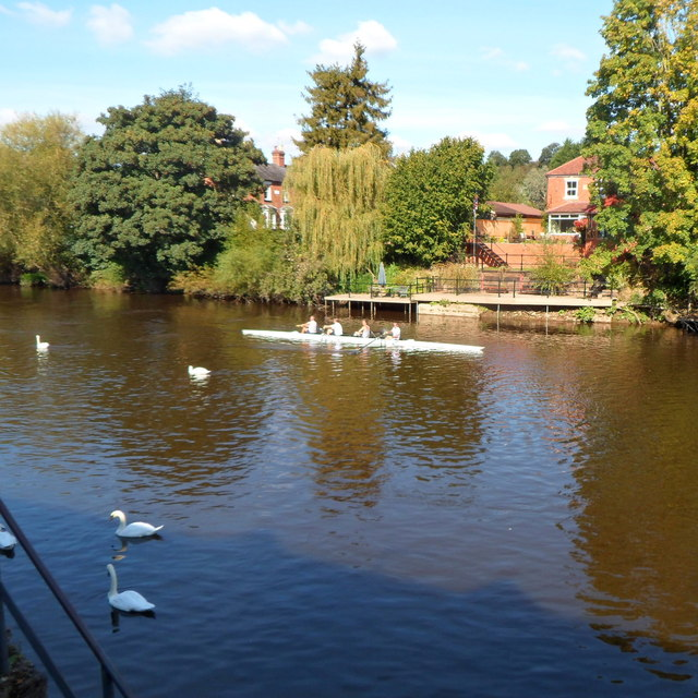 Rowers and swans on the River Severn in Bewdley