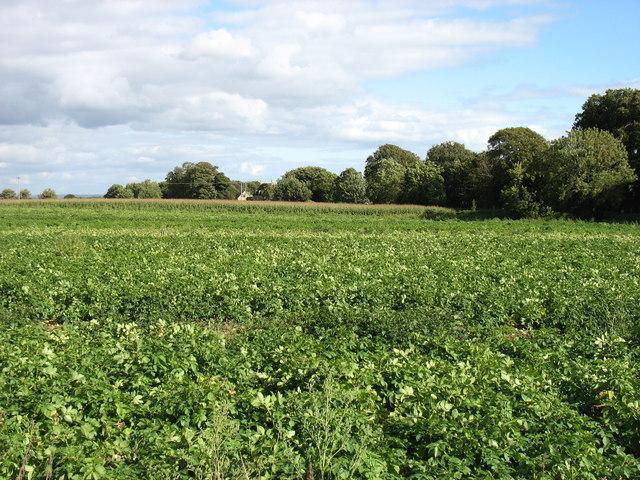 Farmland east of Marshfield