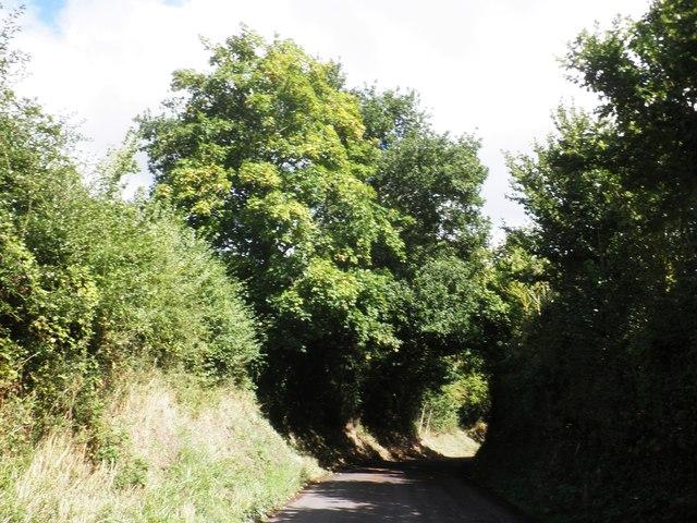 Knapp Lane