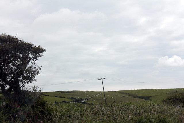Sheep on the hillside near Tyddyn Gwyn