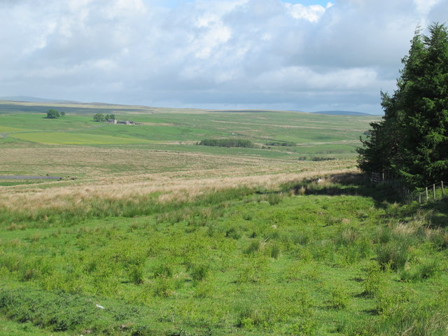 The valley of Durtrees Burn west of Fiddlers Wood