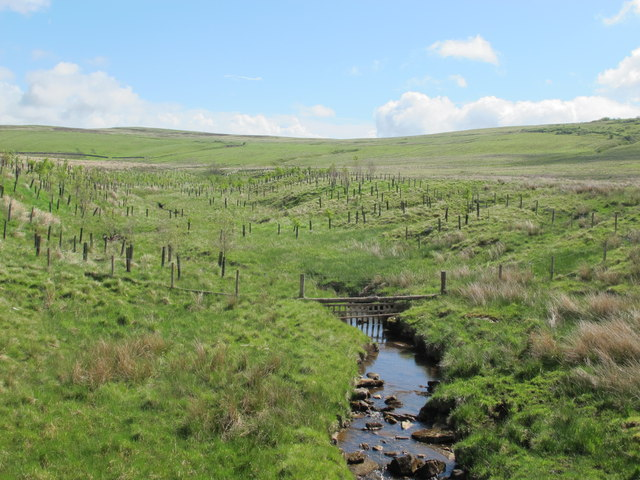 Durtrees Burn and moorland southwest of Branshaw