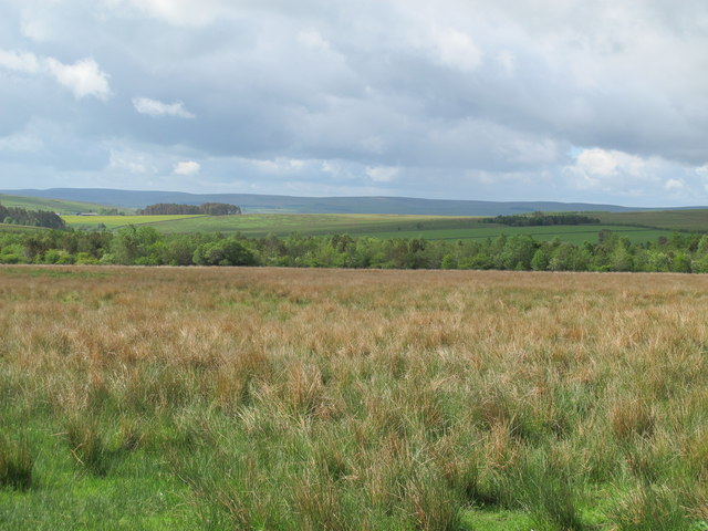 Rough pastures and woodland south of Dudlees Road (2)