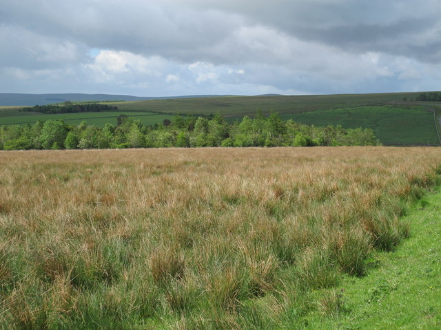 Rough pastures and woodland south of Dudlees Road (3)