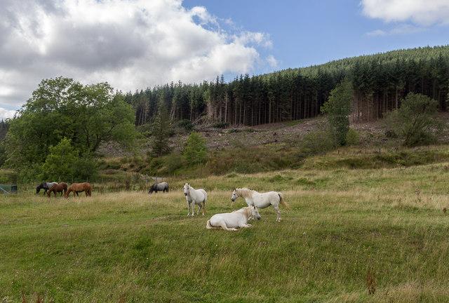 Horses near Taff Trail