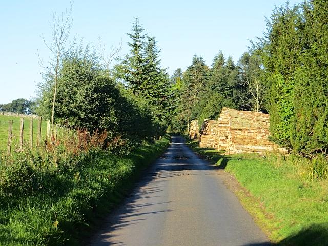 Log pile, Longformacus