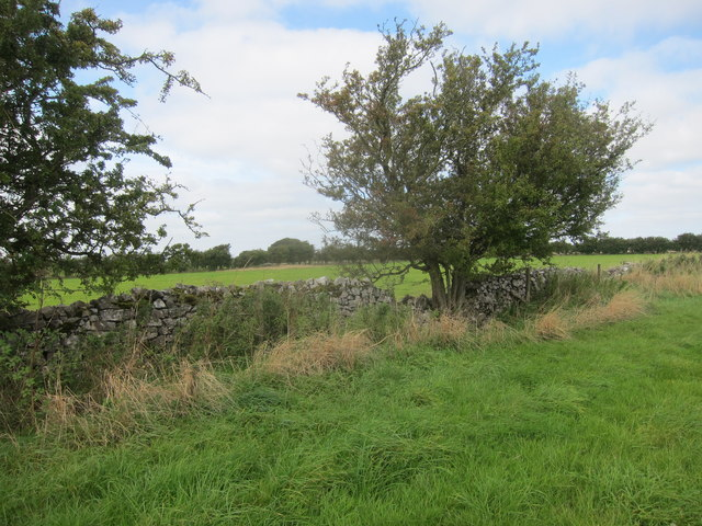Field edge boundary on limestone plateau