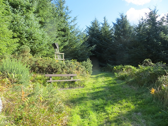 Bench, Penmanshiel Wood