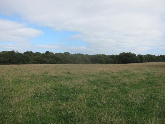 Grazing meadow on upland limestone plateau with woodland boundary