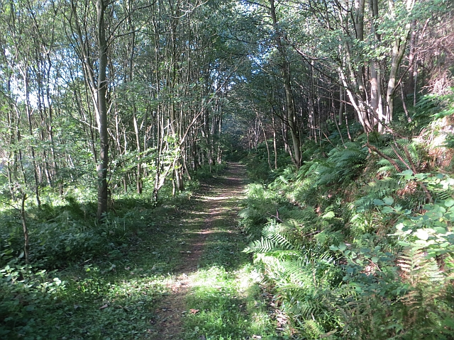 Path, Penmanshiel Wood