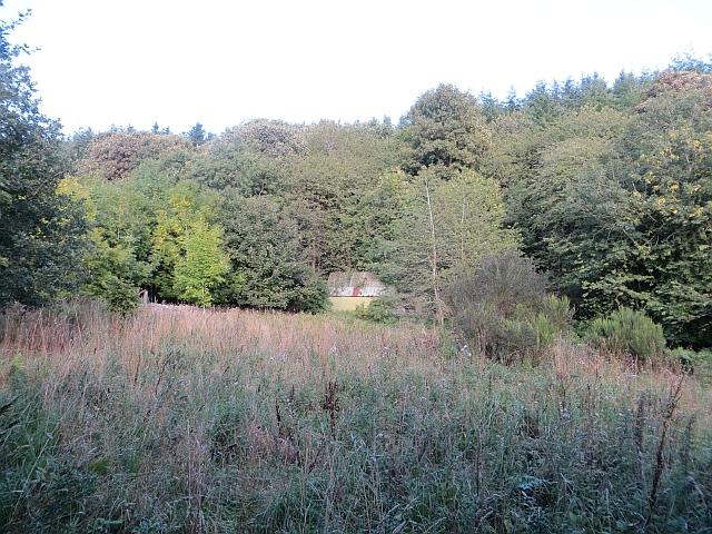 Clearing, Penmanshiel Cottage