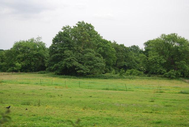 Woodland near Brambletye