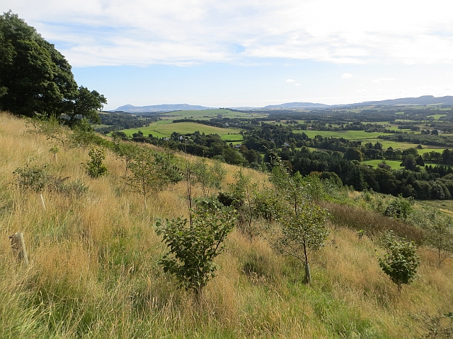 Young woodland on Seamab Hill